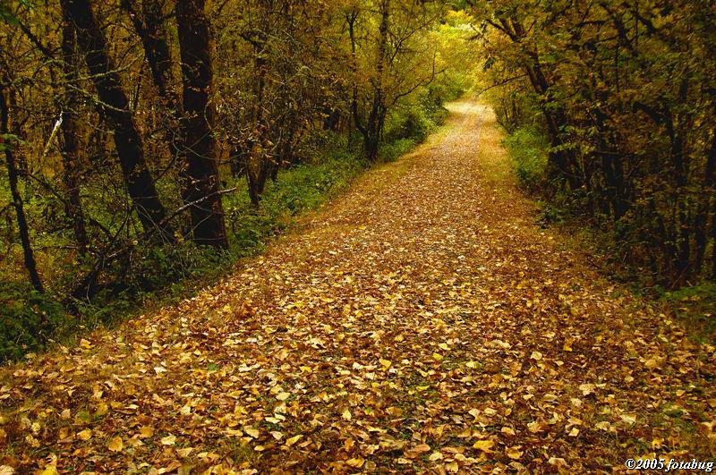 Paved with golden leaves